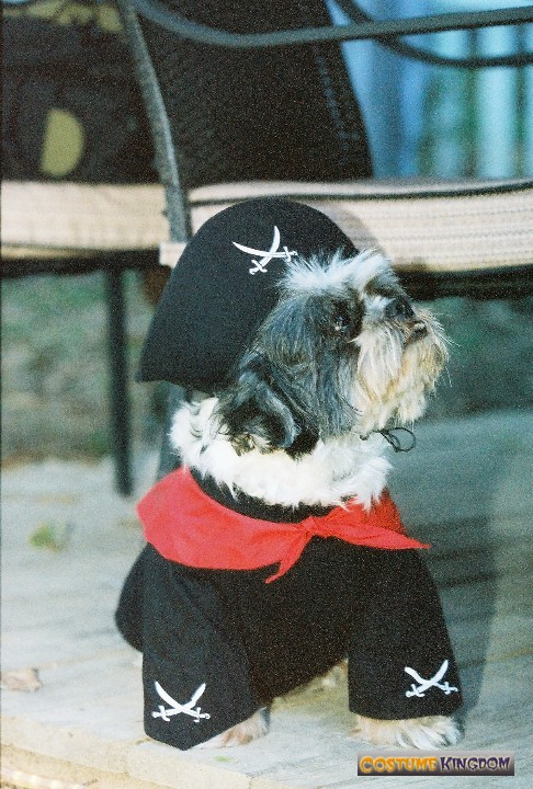Little Jack Sparrow
