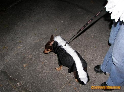 Ditto the Skunk