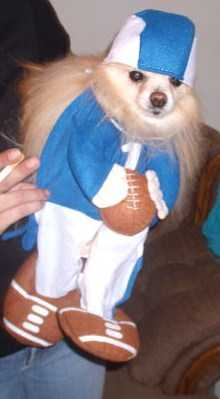 Pomeranian Football Player